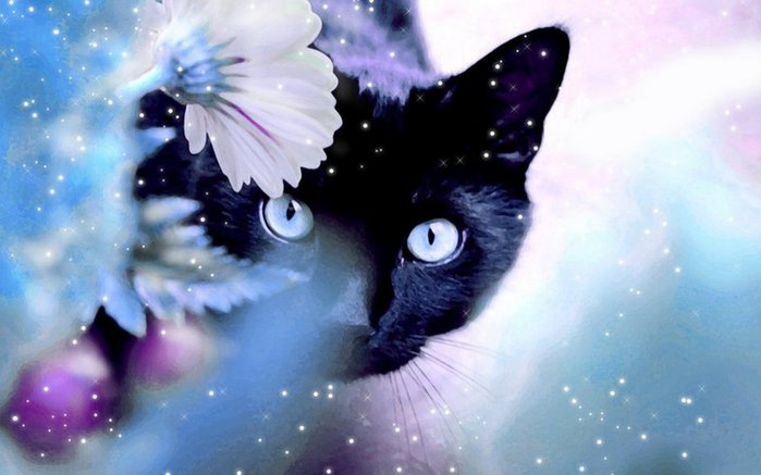 Beautiful-Cat-cats-16095933-1280-800 (700x437, 48Kb)