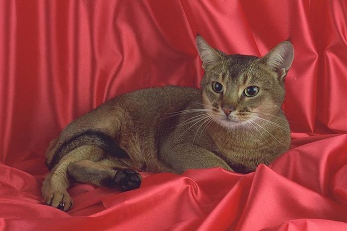 cat1 (700x466, 89Kb)