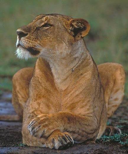 лев левченко фото