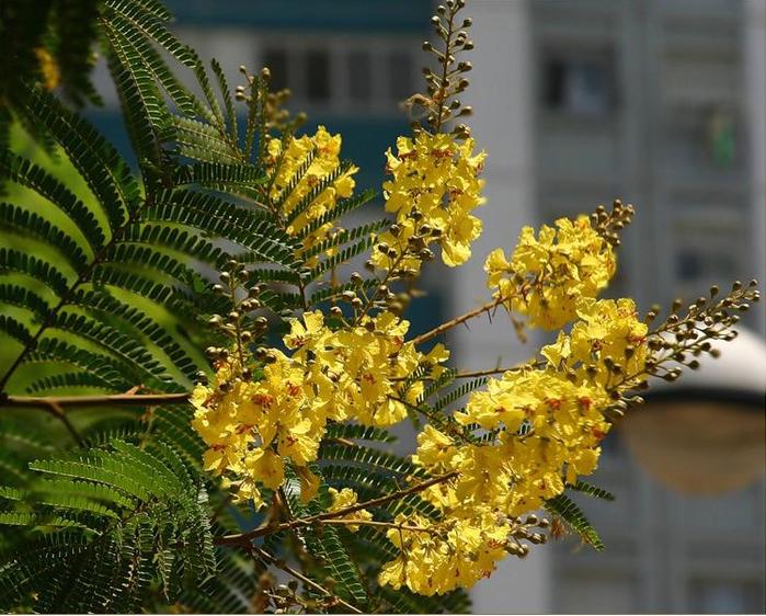 красивые цветы фото/3185107_Bezimyannii (700x562, 438Kb)