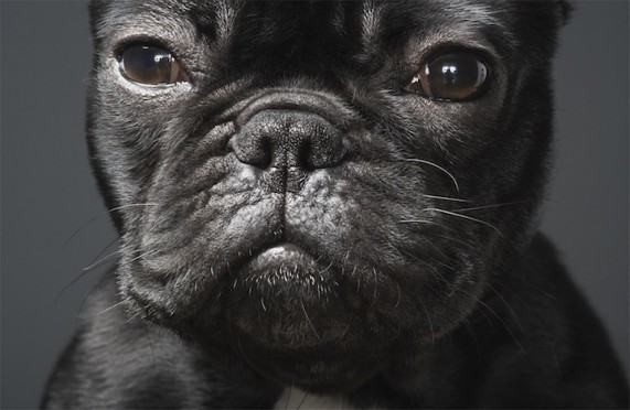 3352215_1294173001_dogs11 (571x372, 51Kb)