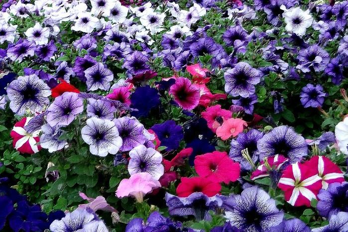 цветы2 (700x466, 179Kb)