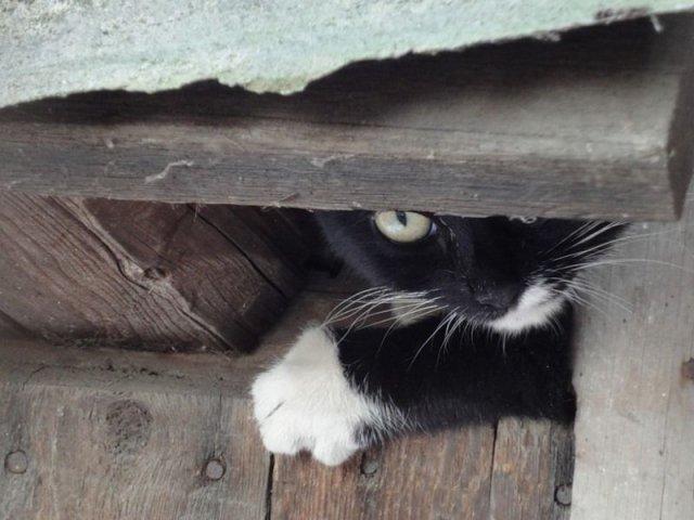 09103-pics_012-cats_firefun_ru (640x480, 52Kb)