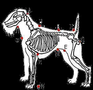 skelet (300x289, 54Kb)