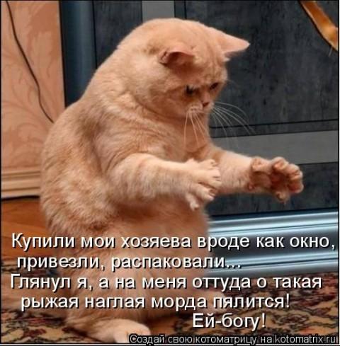 кот (480x489, 72Kb)
