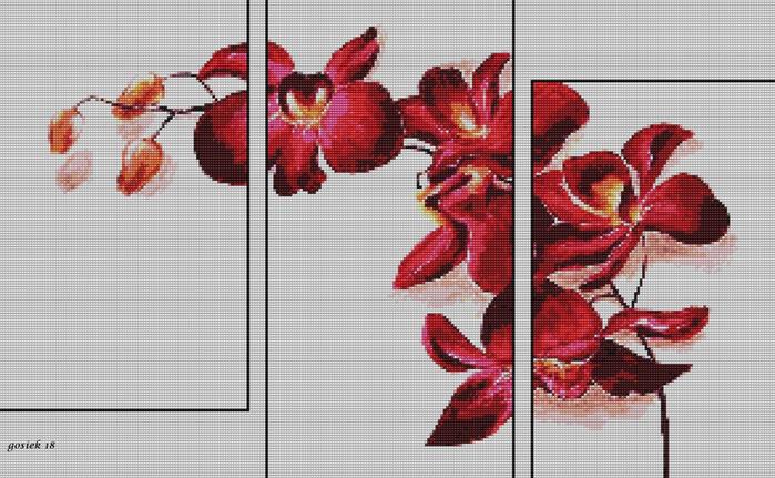 storczyki czerwone 3w1 (700x431, 141Kb)