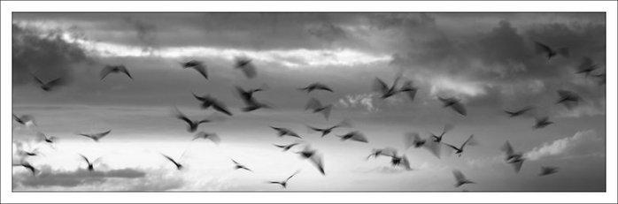 3215701_Swarming_Squall_by_AaronBradford (700x231, 21Kb)