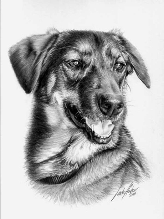 linda-huber-pencil-art-39 (524x700, 77Kb)