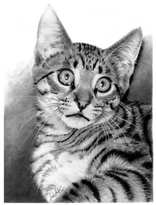 linda-huber-pencil-art-35 (534x700, 89Kb)