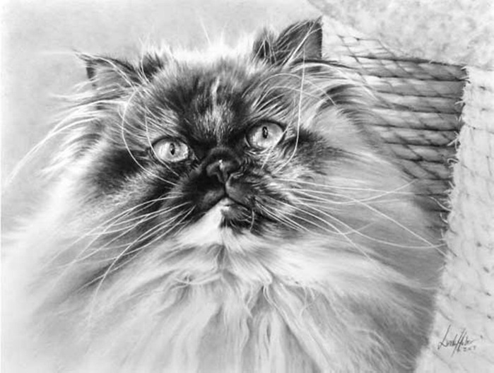 linda-huber-pencil-art-24 (700x528, 84Kb)