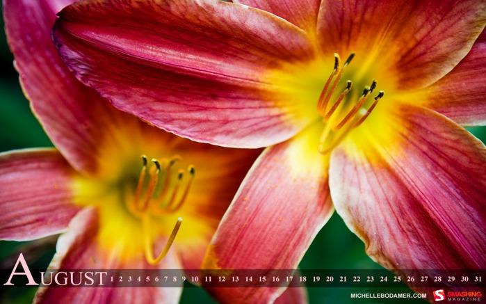 Большая подборка красивых календарей на август 2011/2822077_flower_summer__981 (700x437, 90Kb)