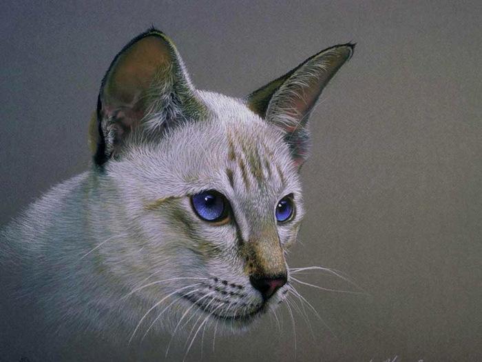 cats-13 (700x525, 106Kb) .