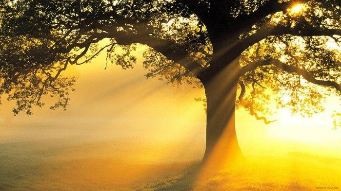 Золотое дерево (700x393, 85Kb)
