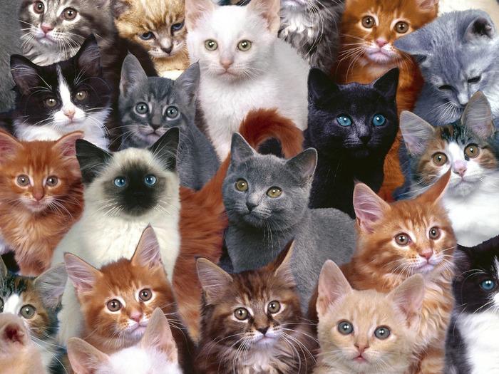 cats_044 (700x525, 165Kb)