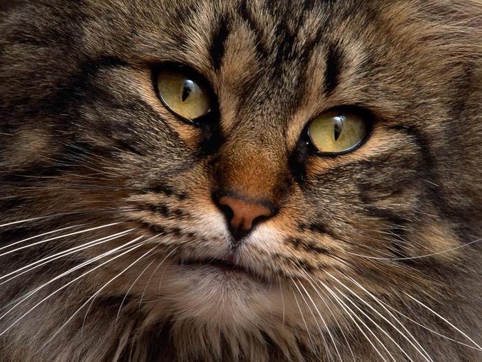 cats_046 (700x525, 198Kb)