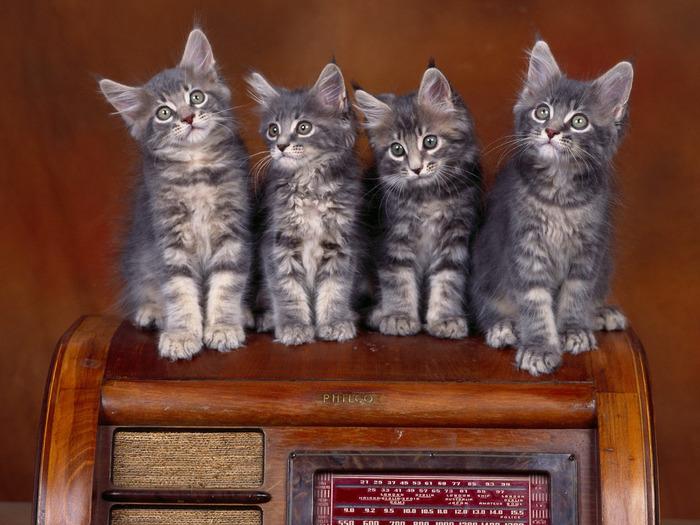 cats_048 (700x525, 131Kb)
