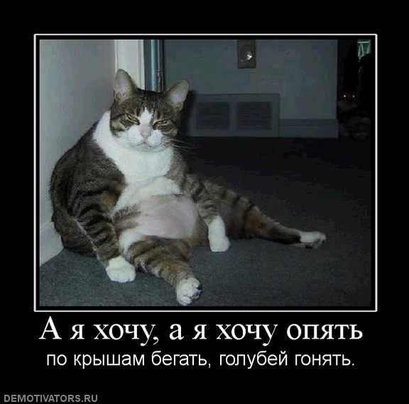 foto-смешные-демотиваторы-картинки-котэ-котэ-демотиваторы-32250 (576x569, 31Kb)