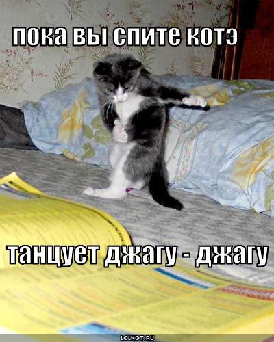 kote-tantsuyet_1267591218 (400x500, 38Kb)