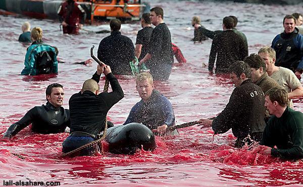 ...убивают около 1000 животных Общество ФОТО 7 Новости на Gazeta.ua.