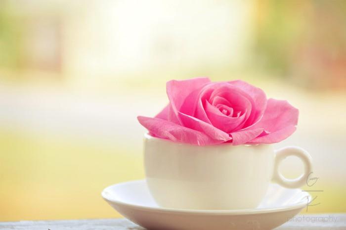 Метки утро доброе утро цветок чашка