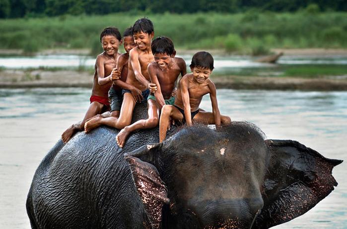 elephant-photos-2 (700x463, 124Kb)