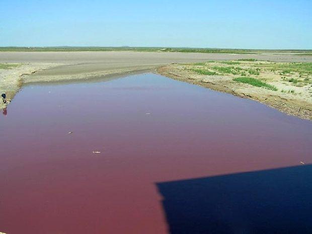 В Казахстане покраснело озеро, гибнет скот