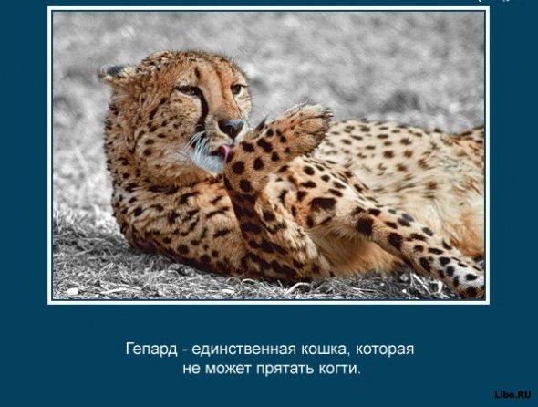 1243915936_a-vy-znali-chto_35753_s__22 (590x446, 57Kb)