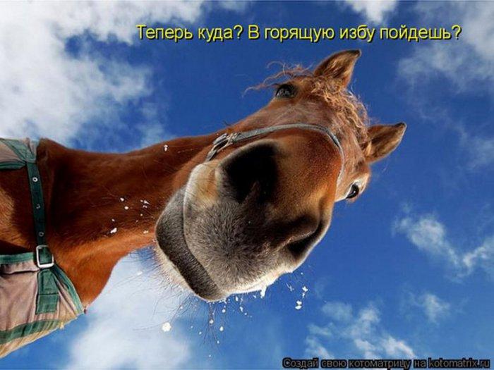 1298277110_kotomatrix495_resize (700x525, 64Kb)