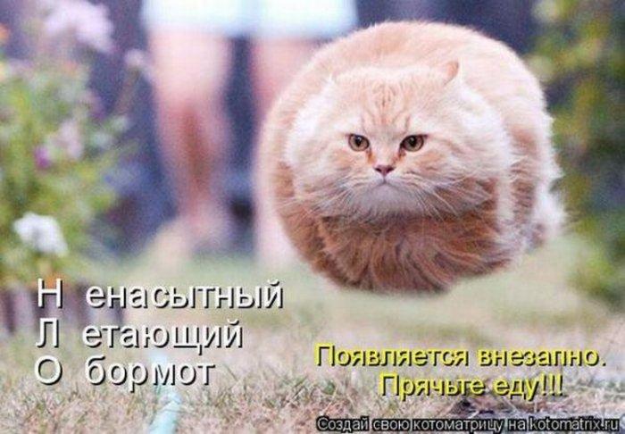 1299701458_kotomatricy_004_resize (700x486, 66Kb)