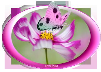бабочка-роз (350x250, 111Kb)
