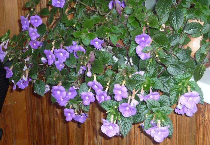 Цветы комнатные дружная семейка фото