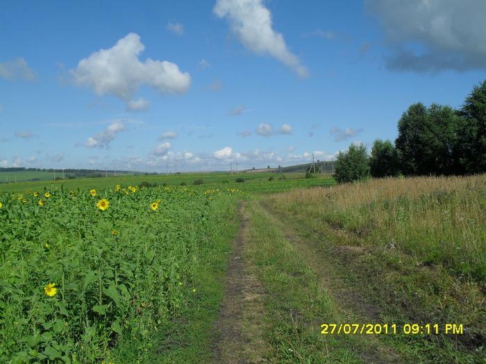 дорога за травой (700x525, 501Kb)