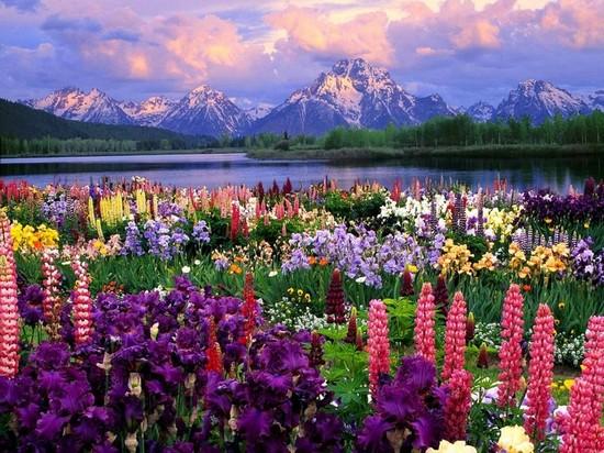 76887453_field_of_flowersfffffffff (550x412, 107Kb)