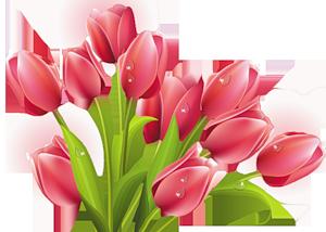 http://img1.liveinternet.ru/images/attach/c/3/76/900/76900599_2374021_0_93f04_abbcb708_M_1_.png