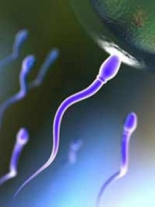 sperma-225x300 (225x300, 12Kb)
