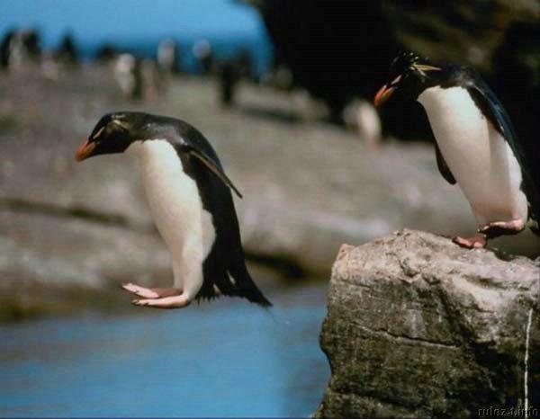 pingwiny_22 (600x466, 35Kb)