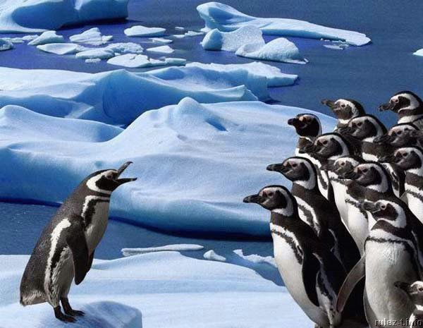 pingwiny_11 (600x465, 62Kb)
