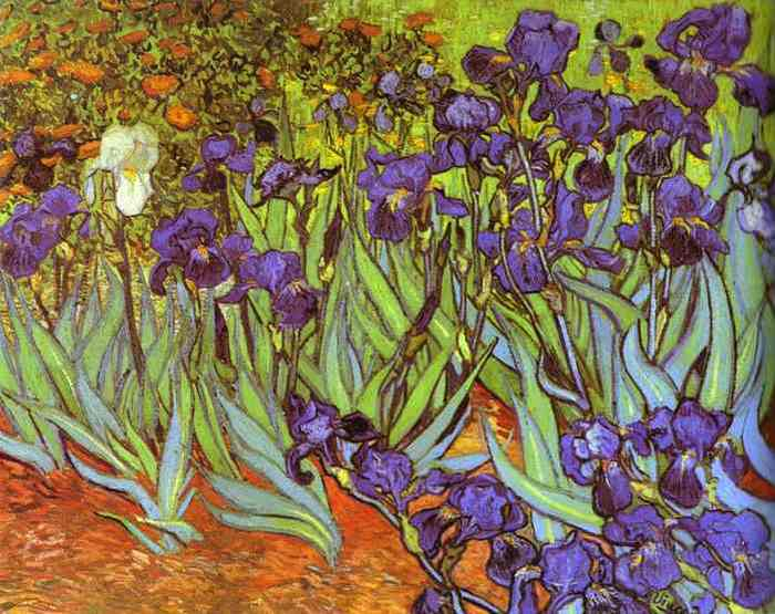 irises (700x555, 55Kb)