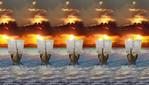 Превью Sunset-Sails (700x399, 121Kb)