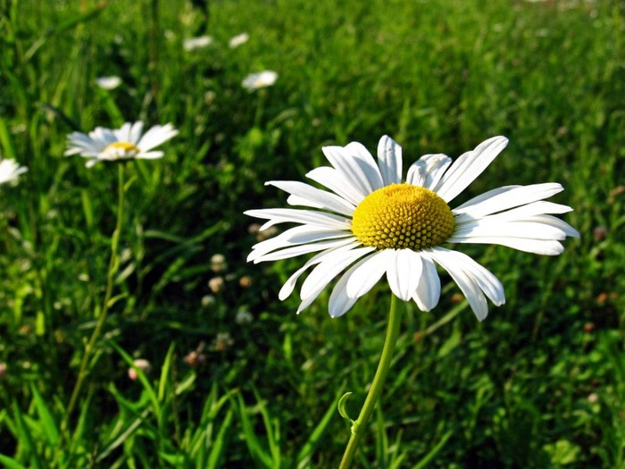 flowers_800x600 (700x525, 98Kb)