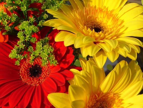 Осенние цветы музыка для души