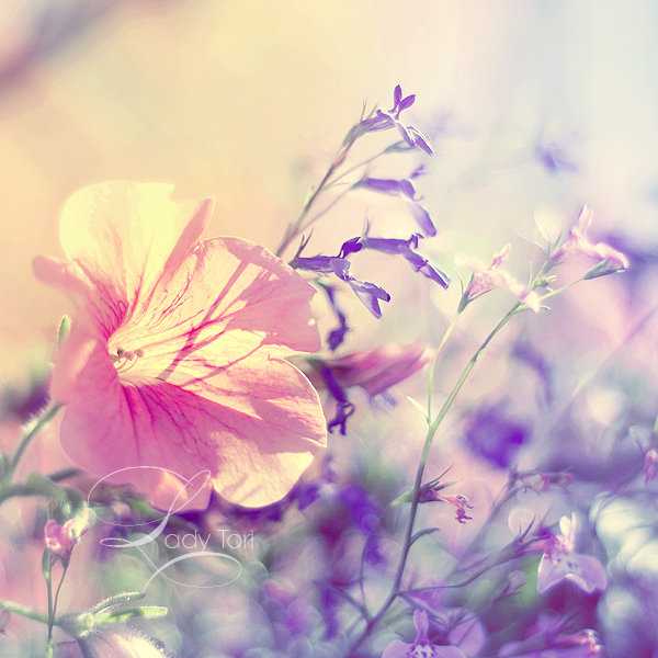 Метки утро доброе утро цветок