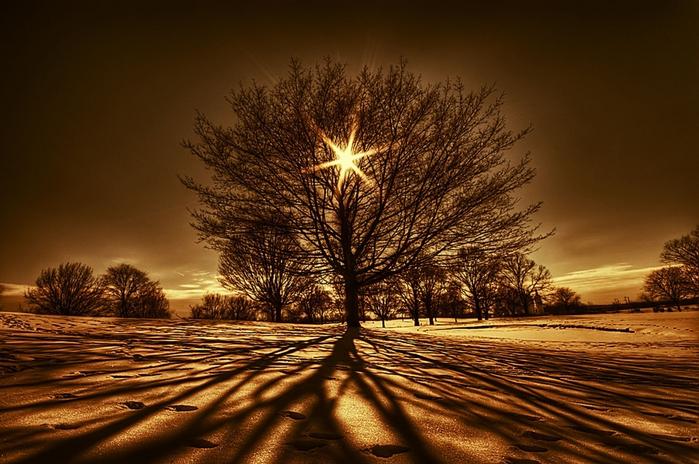 Ваше дерево