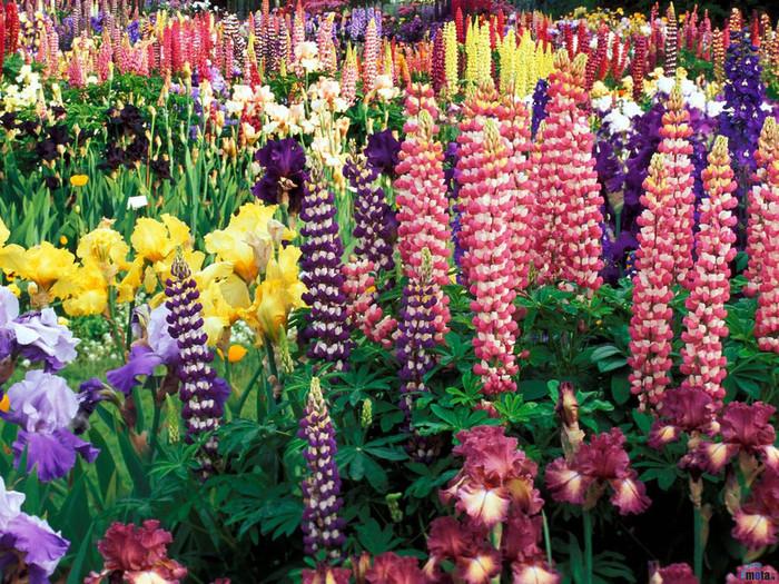 flowers_435 (700x525, 245Kb)