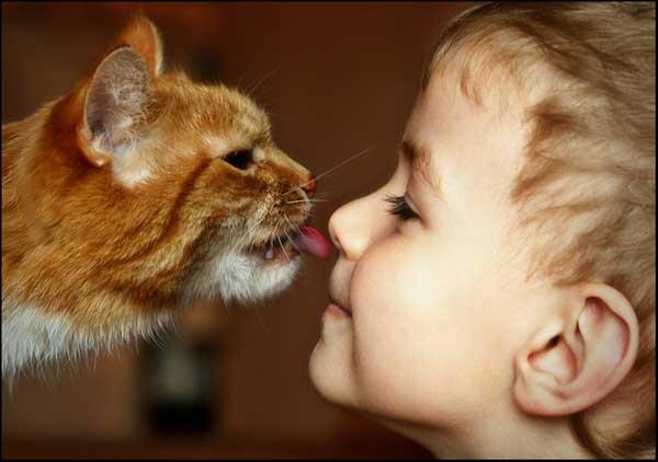 кошкотерапия_кошки_люди_05 (600x422, 23Kb)