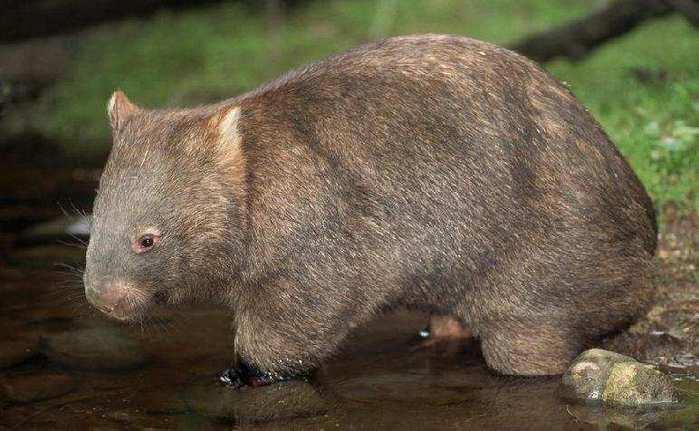 Фотографии животных 31. Животные Австралии.