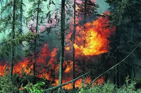 Пожары в тайге фото