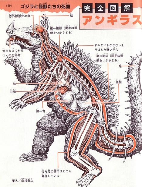 anatomy-anguiras (468x614, 141Kb)