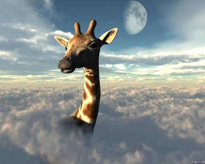 giraffe-n (700x560, 34Kb)