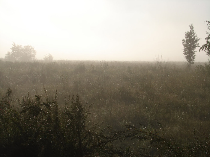 Поле в тумане/1313761661_2 (700x525, 86Kb)